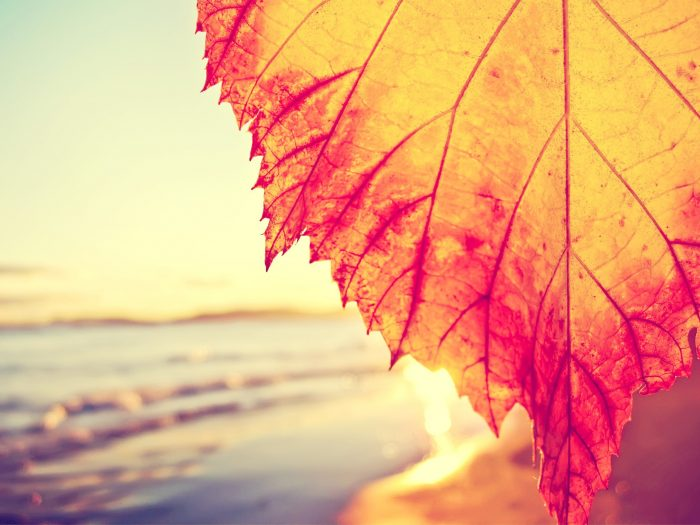 Autumnal-Leaf-Covering-The-Beach-Wallpaper-2560x1600