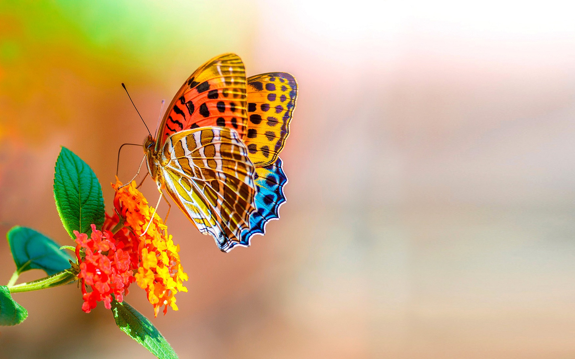 Butterfly Wallpapers 51 1920 x 1200