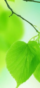 Leaves-Green-Close-Up-Branch-1080x2340