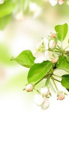 Leaves-Spring-Flowers-Apples-1080x2340