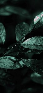 Nature-Dark-Leaves-Macro-Depth-1080x2340