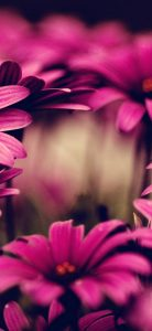 Nature-Flowers-Pink-1080x2340
