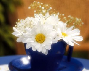 White-Glowing-Flowers-1280-x-1024